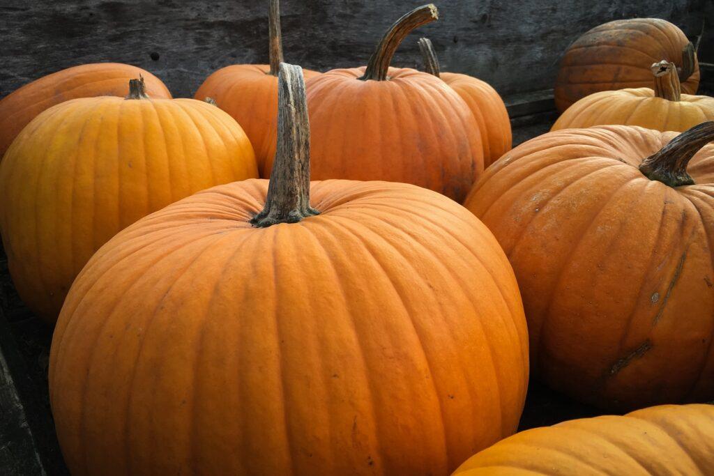 Funny Halloween Pumpkin Images