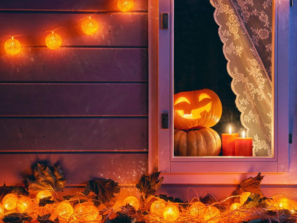 Pumpkin is watching you in the window.