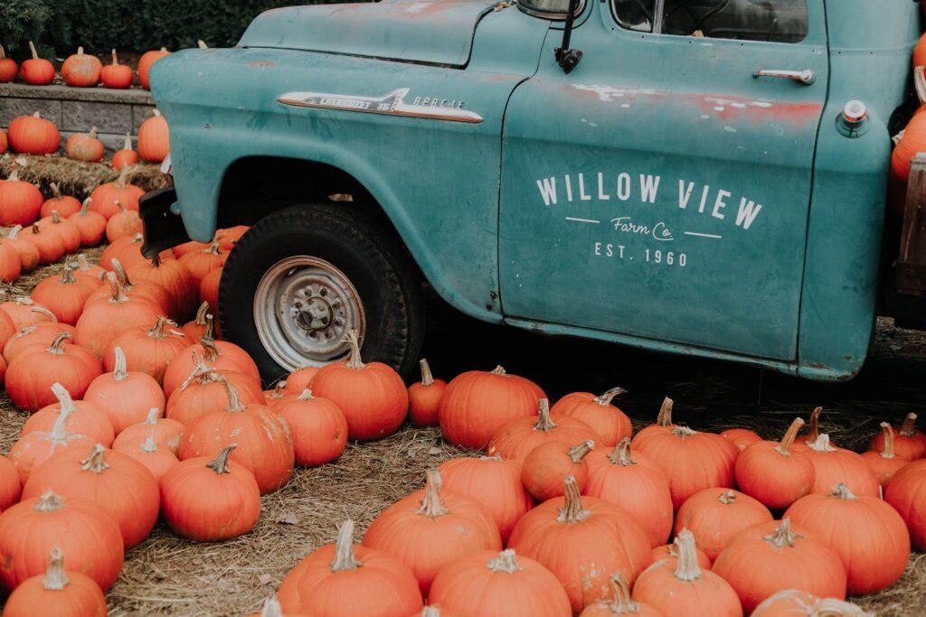 images of Halloween pumpkins
