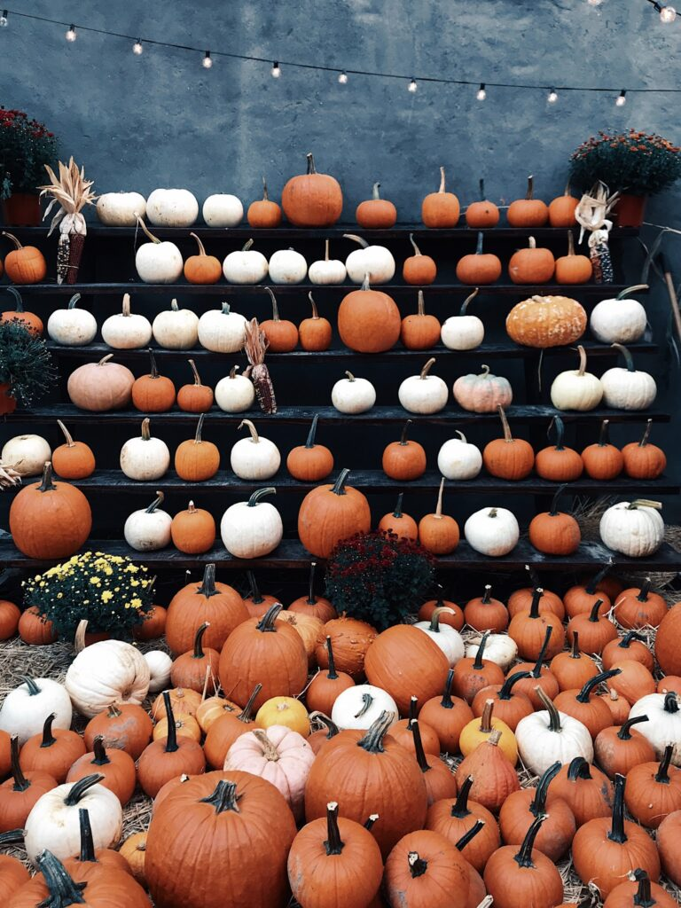 A lot of pumpkins is in one frame.