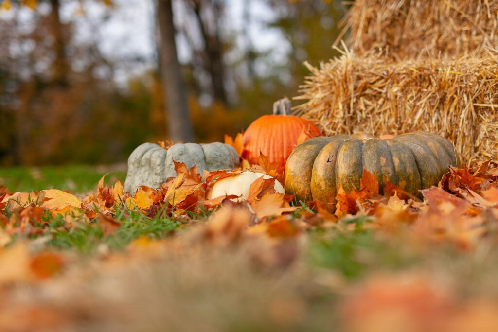 Four pumpkins are on the grounds, and a lot of leaves are covering them.
