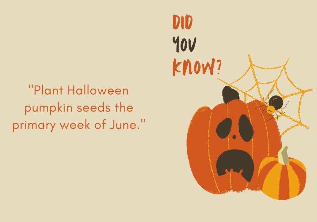 Weird Pumpkin Facts - pumpkin month