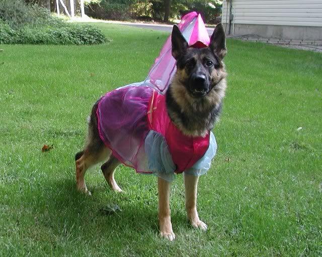halloween german shepherd